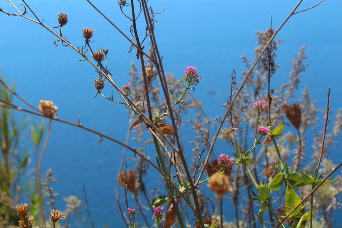 Fleurs Ischia